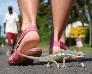 Madagaskar - Masoala - Podróżniczy Klub Filmowy