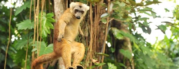 14. 06 Polacy na Madagaskar! - Podróżniczy Klub Filmowy