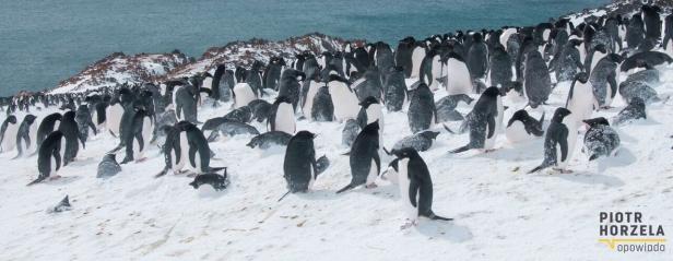 13.12 Antarktyka - stacja polarna, lodowce, pingwiny